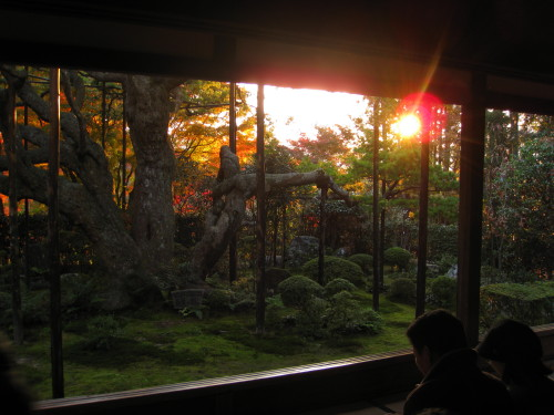 Hosen-in pine at sunset