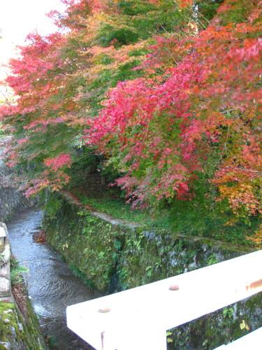 A bridge over the stream