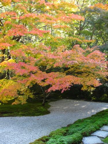 Autumn leaves at Nanzenjii