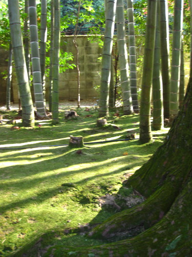 Moss carpet & bamboo at Nanzenji