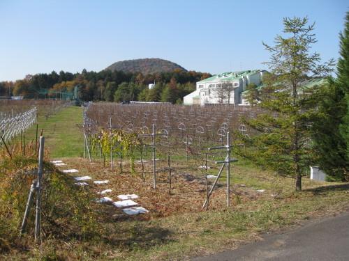 View of Tamba Winery