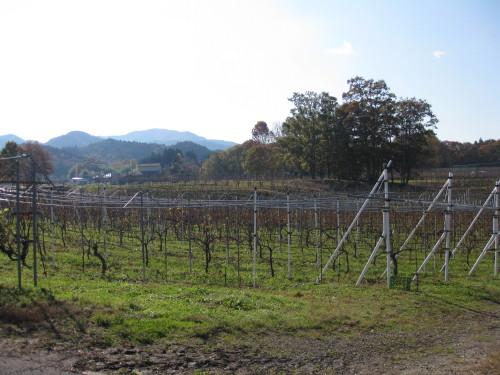 View of Tamba Winery Vines