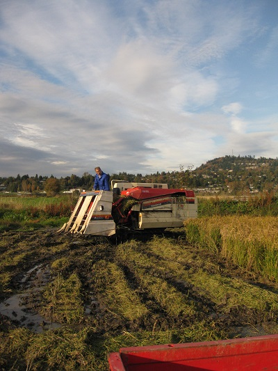 Rice-harvesting Combine on Abbotsford Field