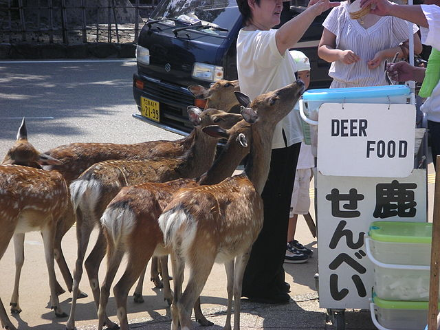 Please, don't feed the deer. Photo used with permission:
