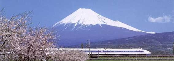 Cherry blossoms, Shinkansen (Bullet Train), and Fuji-san