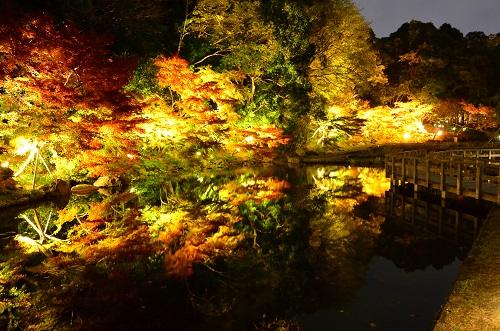 Tokugawa Museum Garden on a November Night.  Photo credit to www.nagoya-info.jp/en/