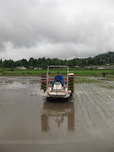 The rice seeder at work