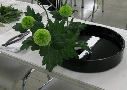 Pompom chrysanthemums in black suiban