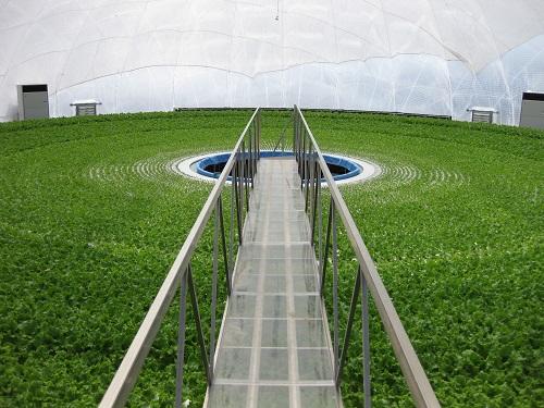 Interior of a Granpa Dome Factory Farm